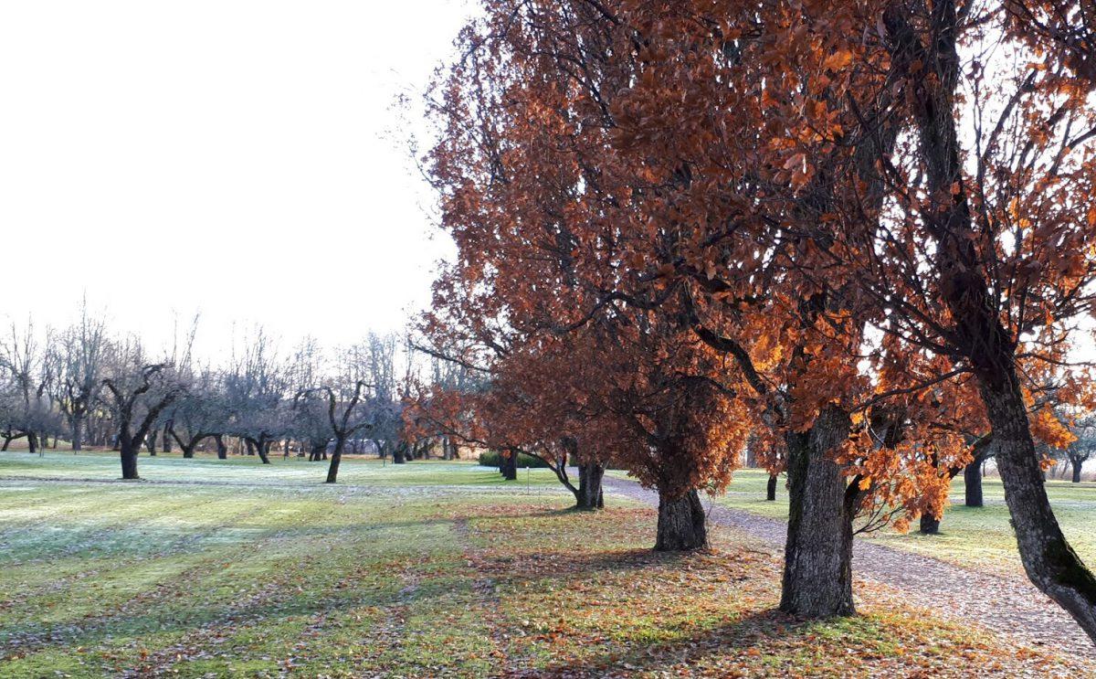 Wiese mit Streuobstbäumen